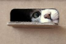Cats in Boxes,Bags,Baskets,Bowls / Cats love to climb inside containers of any shape or size, whether they quite fit or not. / by carol emma