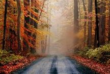 The Road Home / by carol emma
