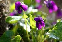 Garden Dreaming / One of each pls.