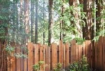 CCY backyard revamp