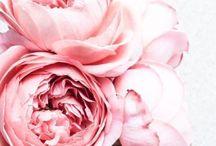 Flower Festival / Flowers   Bouquets in bloom, centrepieces & flower markets