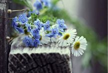 """Flower love / """"Let us dance in the sun, wearing wild flowers in our hair...""""  ― Susan Polis Schutz  / by Diana Jacobsen"""