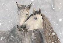 equine + beauty