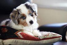 So cute! / Animals / by Kelly Creegan