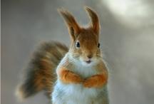 Egern låååve