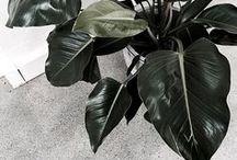— plant-based / Minimal greenery.