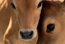 Pets & Farm Animals / by Joann Brown