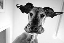 I love Dogs! / by Vesna