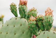 Excellent Succulents / by Jenn Chen