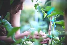 Homegrown Kitchen / Why buy it when you can grow it yourself? TakePart shows you how to take back your kitchen with these easy tips and tricks for making and growing your favorite food and kitchen products, right in your own home.