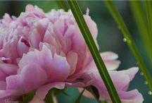 Green Gardening / by Maid Brigade