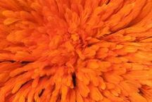 Orange / by Lori Padgett
