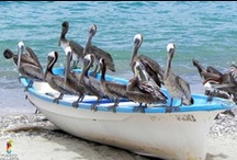 Animals in Puerto Vallarta! / ¡El reino animal nunca deja de sorprendernos! More than once we have been surprised by the animals!