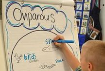 anchor charts / Kindergarten anchor charts to support learning in the Kindergarten classroom.