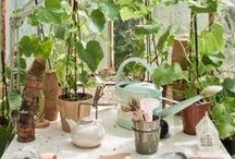 Growing // Garden