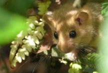 Animals 6 - Mice / by Pauline Coombes