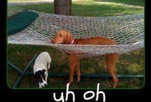 Funny!! / by Jennifer Reed-Hawkins