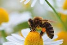 Humble Bee~s / by Jeannie