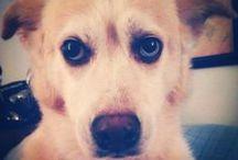 Farrah Dog
