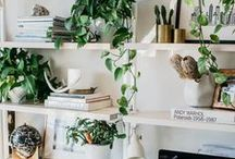 House Plants / There's nothing like greenery to bring the outdoors in! Here you'll find everything from tiny succulents to the most stunning indoor trees, green and living walls and ideas for making the most of your urban jungle!