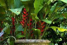 Tropical Garden / Gartendesign mit tropischem Flair