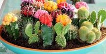 Kleiner grüner Kaktus