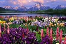 Pretty Flowers / by Toni Blankenship