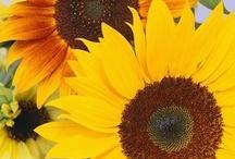 My Favorite Flower / by Toni Blankenship