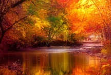 """Photography - Nature's Fire / """"Autumn is a second spring when every leaf is a flower"""" Albert Camus"""