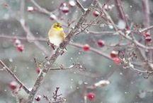 Winter Wonderland / Prince Edward Island in wintertime