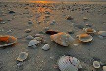 Beach Bound / by Margo Millure