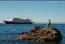 Sea of Cortez / by Margo Millure