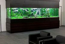 Fish/ aquascape/ Shrimp tank / by Sunshine Scott