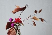 Modern Lotus | BRANDING / brand plan for the lotus root / by Studio Marbel