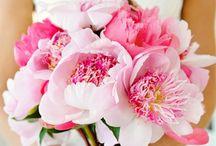 Flora & Fauna / Flowers & arrangements