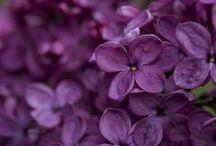 Purple My Love