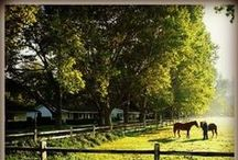 Dude Ranch & Cowboy Vacations / The Dude Ranch & Cowboy Vacations Family Travel Board is dedicated to the our favorite family-friendly Dude Ranch & Cowboy family vacation destinations and kid-friendly activities! #FamilyTravel #Trekarooing / by Trekaroo Family Travel