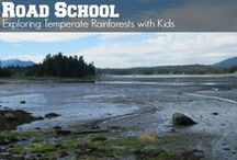 Road School: Forests / Field trip ideas, books, videos, and fun projects that families can enjoy and do together to learn about different forest habitats life temperate forest, temperate and tropical rainforest, upland forest.