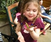 Road School: Bugs / Family-friendly spots to learn all about entomology and bugs.