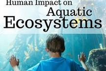 Aquatic Ecology with Kids: Road School Family Travel / Road School: Human Impact on Aquatic Ecosystems. Family travel ideas for teaching kids how to appreciate the ecology of our bays, lakes, estuaries and local watersheds.
