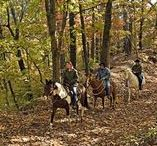 Arkansas with Kids / Arkansas is a beautiful outdoor adventure destination for families. Plan a family vacation or road trip through kid-friendly Arkansas.