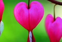 Love Is In The Air / What's not to love
