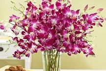 Orchids  / by Penelope Sarris