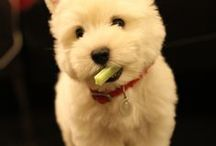 Babies - Baby Animals / We just love babies...even the fuzzy furry ones!!  Find unique and personalized puppy gifts!