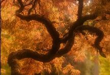 The Silent Watchers / Trees / by Mikayla Kopf