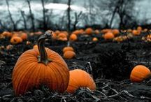 Autumn and Halloween / Glorious forests, witchy, familiars, leaves, Halloween inspiration, melancholy, and the coming of winter.