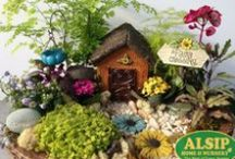 Fairy Gardens / Fairy Gardens, or miniature gardens, are a fantastic hobby for all ages. Create beautiful scenes using tiny furniture, pebbles, and plants!