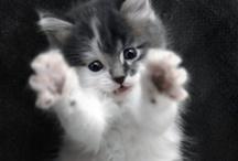 Awww...So Cuuute / Cute animals being cute.