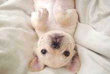 Happy doggies / by Catalina Garreton