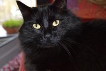Gatti / Felini di vario genere, i miei e quelli degli altri...